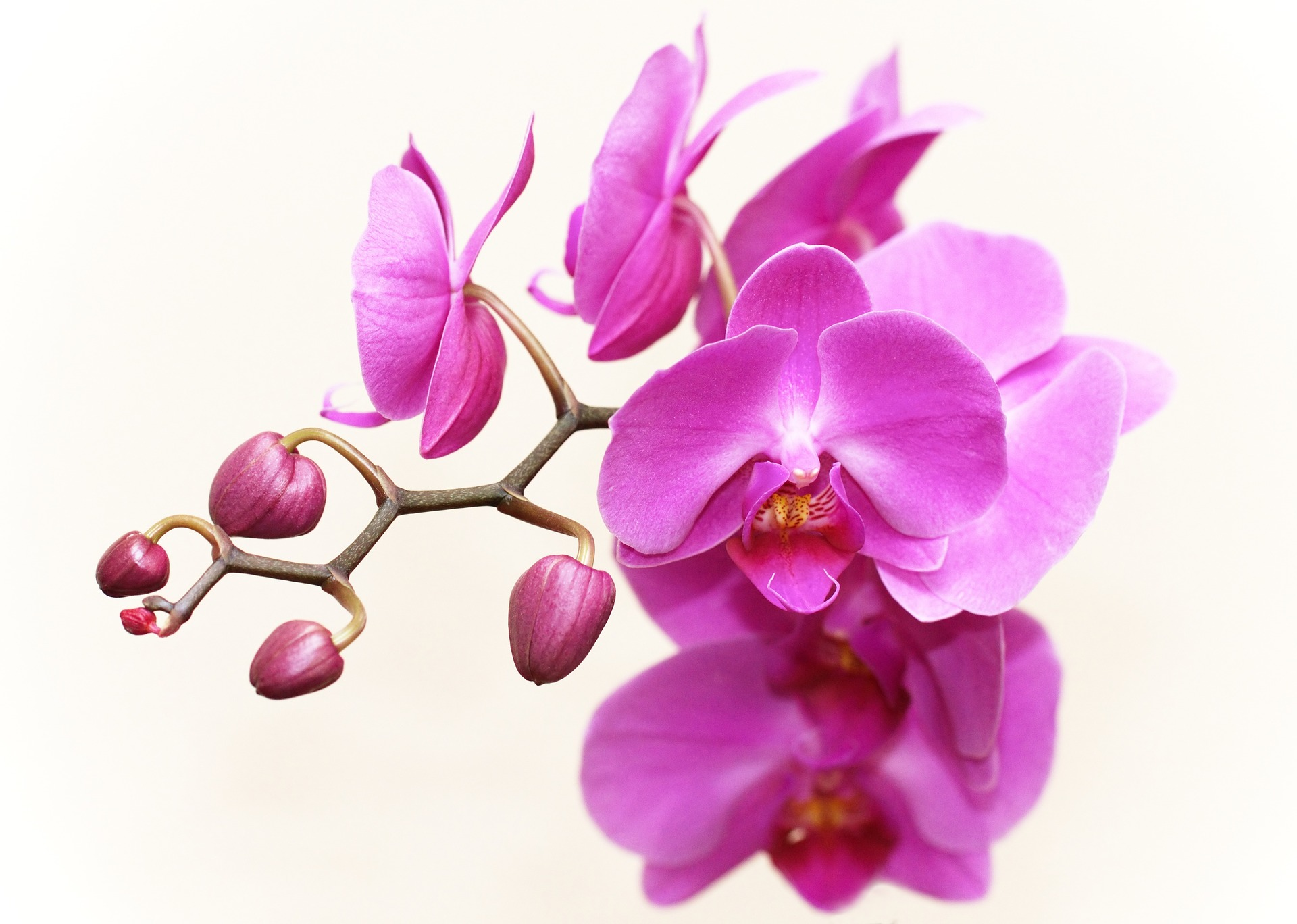 orchid-2265587_1920